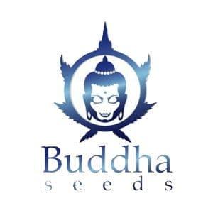 Buddha Seeds Logo