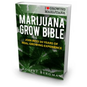 ILGM Grow Bible