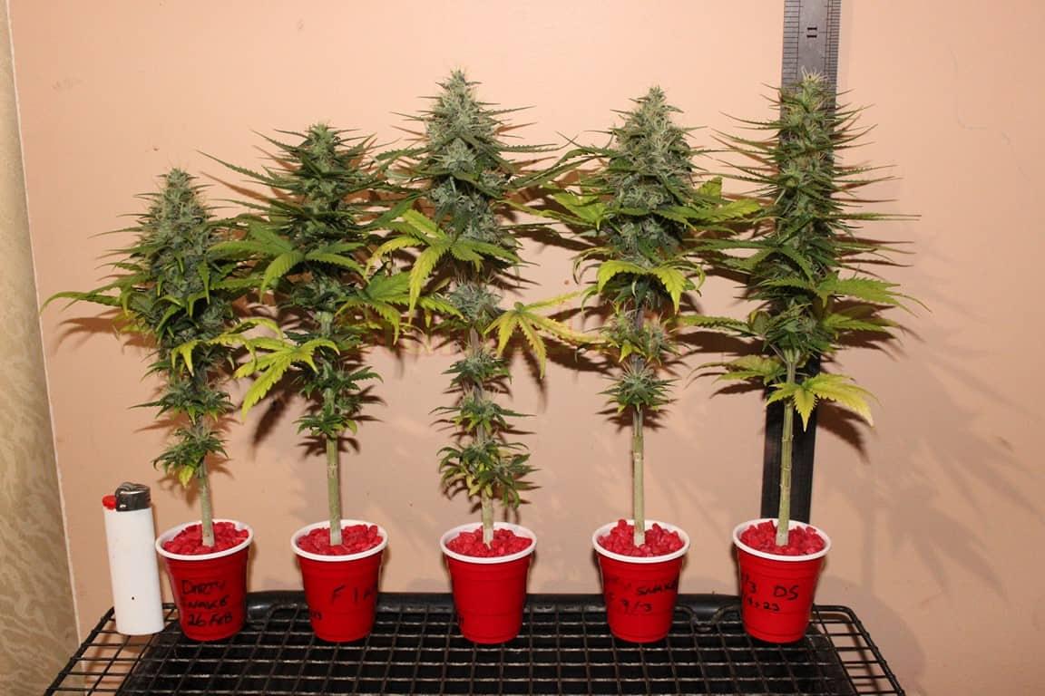 Autoflower Micro Grow