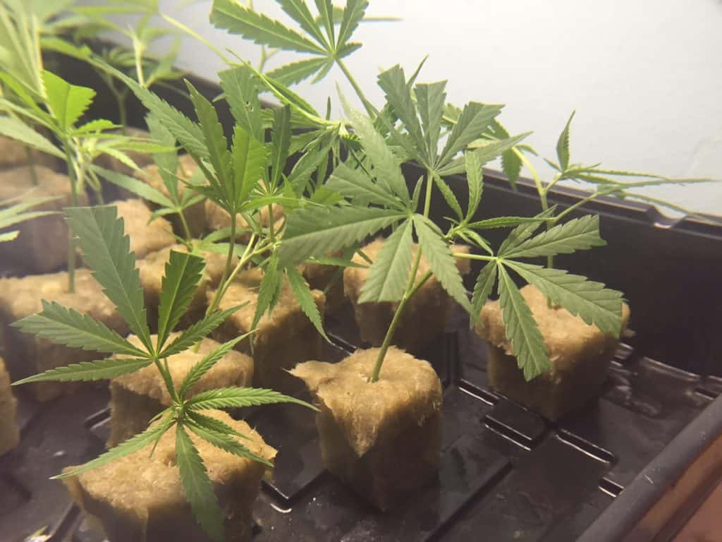 Clones from Monster Cropping